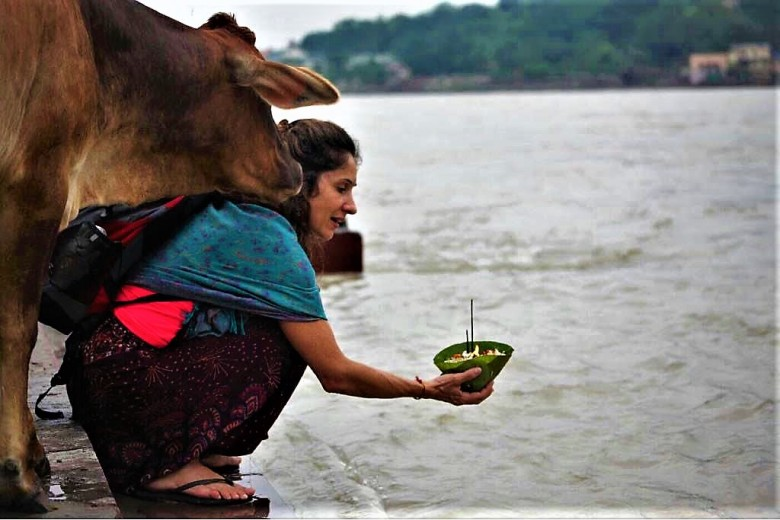 cow ganges